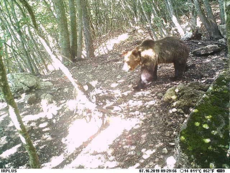 Una fifa da orsi