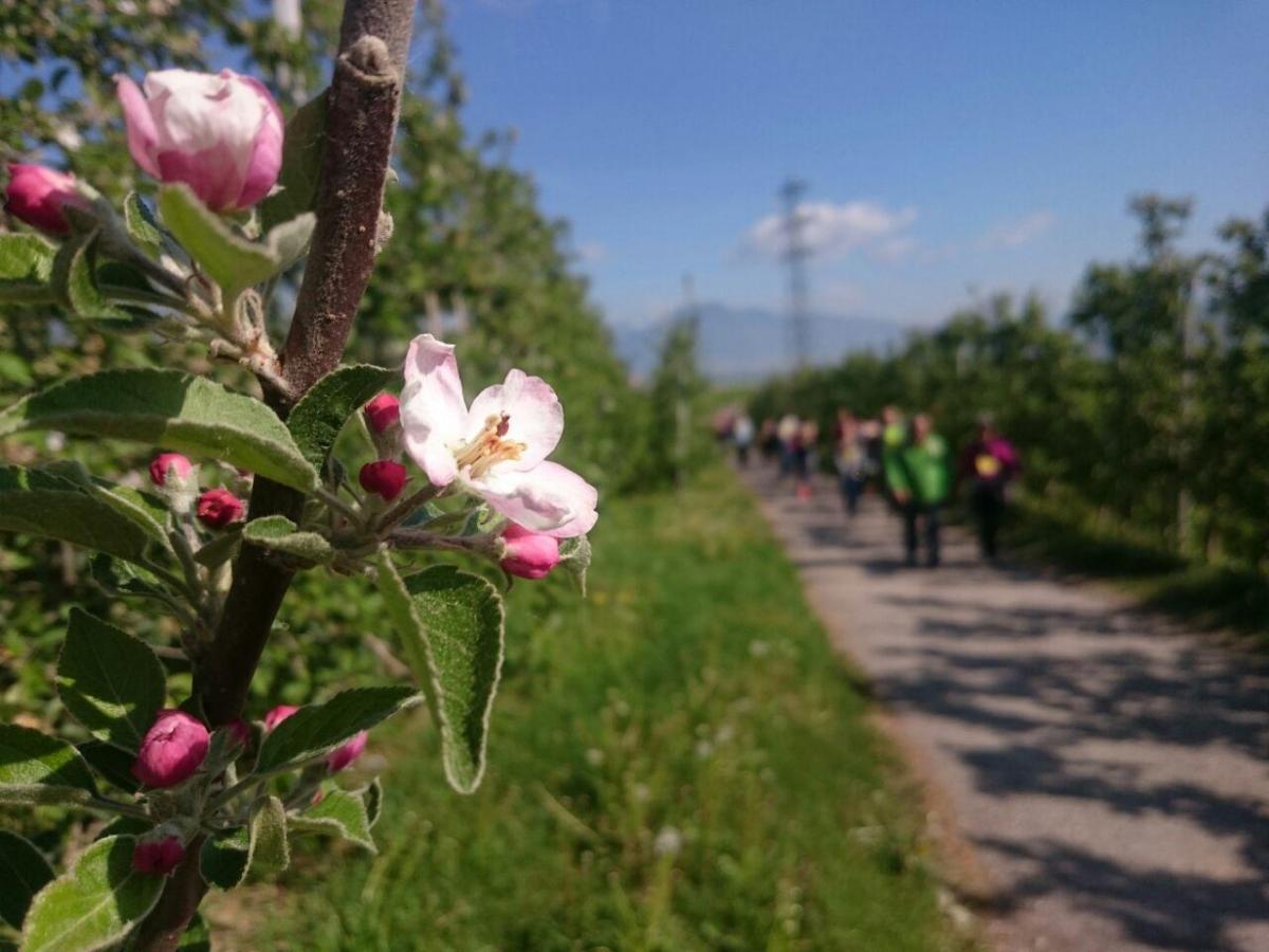 Rinascita e speranza: dopo il Calvario arriva la Pasqua